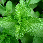Fresh herbs can help you get rid of bad breath