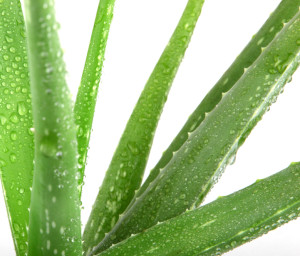Control oily skin with Aloe Vera Gel