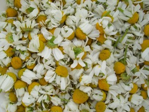 Natural remedies for anxiety: Chamomile